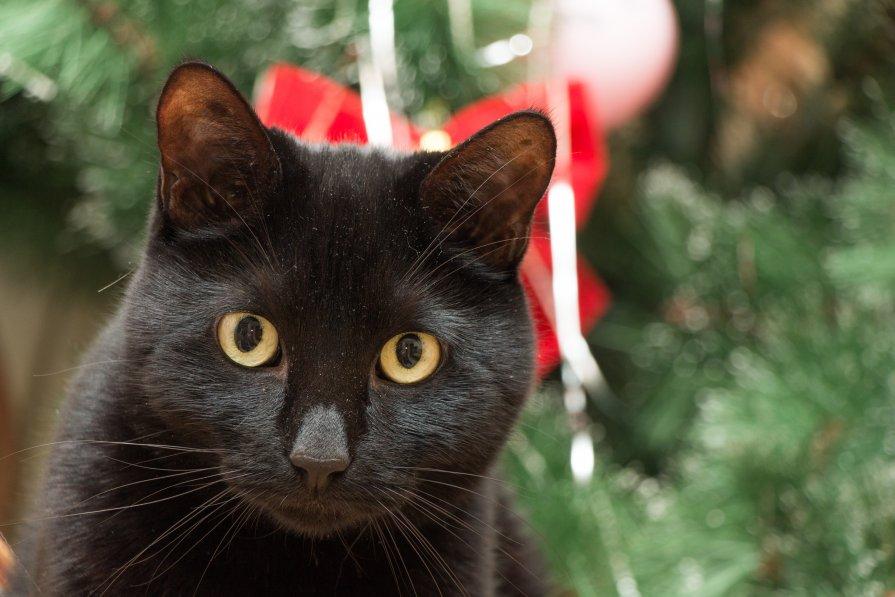 Новогодняя кошка - Иван Кибирев