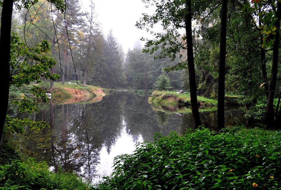 Лесной пруд - Олег Сливанков