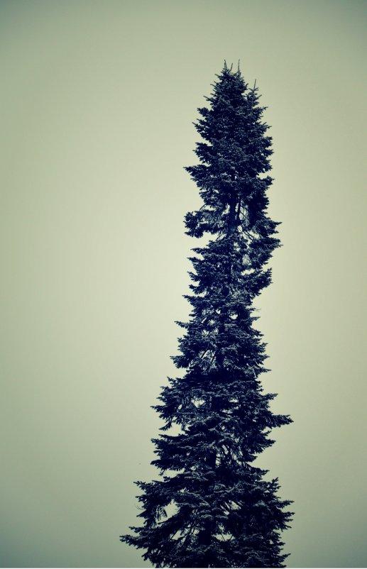дерево - Zlata Tsyganok