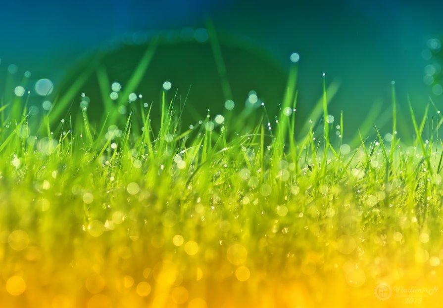 На траве роса... - Владимир Ноздрачев