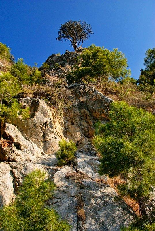 И на камнях ростут деревья - Михаил Карпов