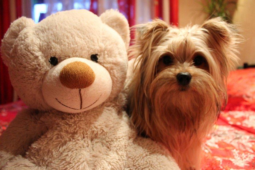Маркуша со своим любимым Медвежонком - Диана Вакуленко