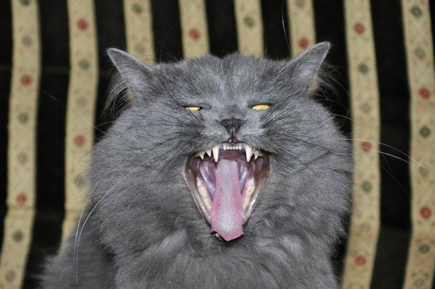 все мы страшненькие, когда зеваем))) - Аня Белинская