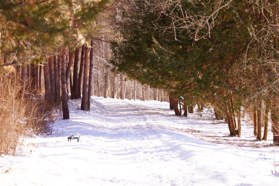 Мой парк... - Юлия Кулиева