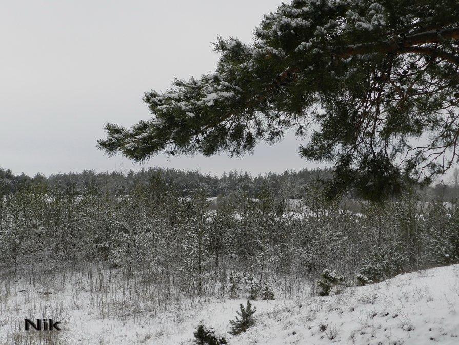 Зимний лес. - Nik ...
