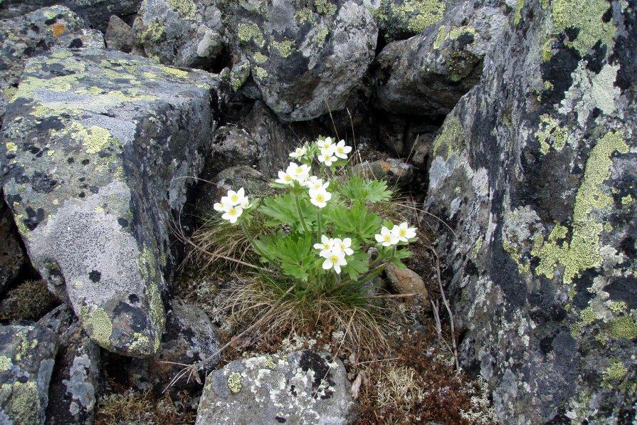 Цветы и камни - Сергей Комков