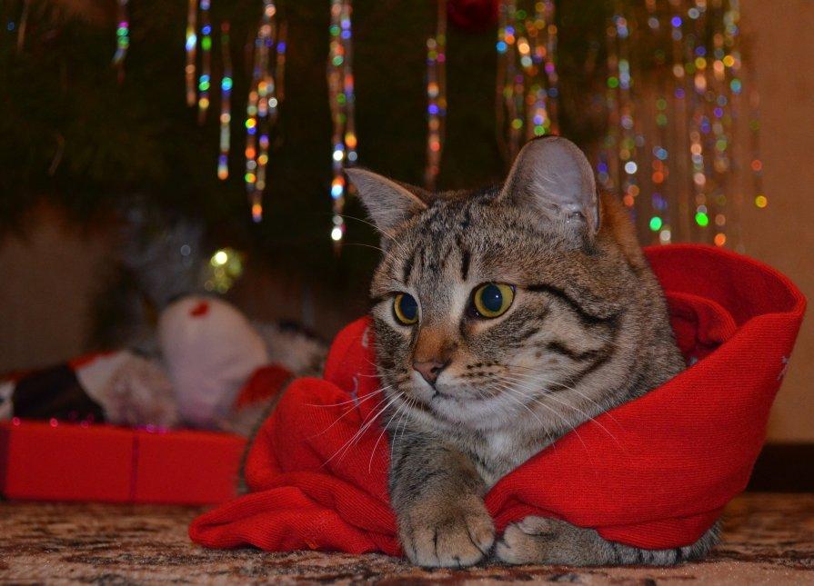 Новогодний кот - Анна Румянцева