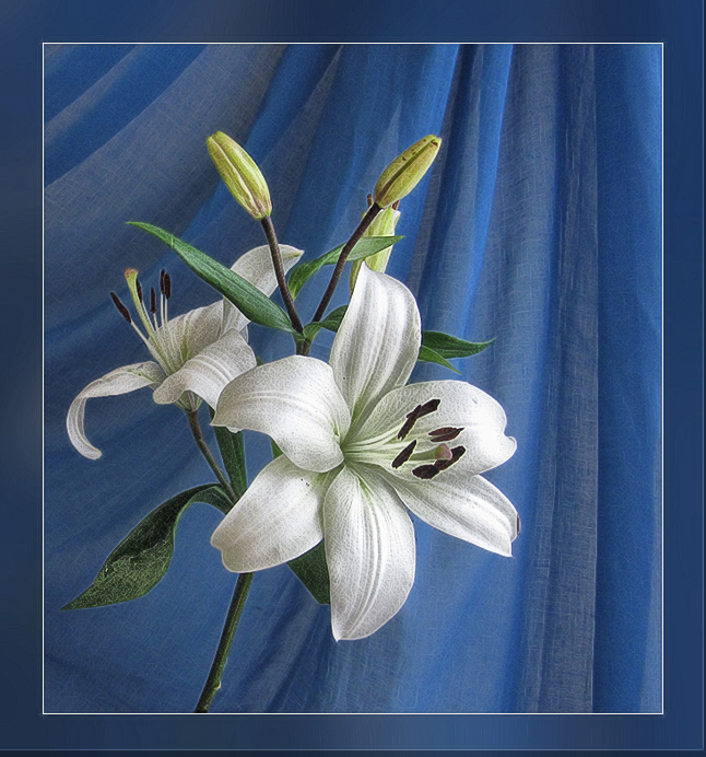 Распустились белой лилией чудесной... - Luis-Ogonek *