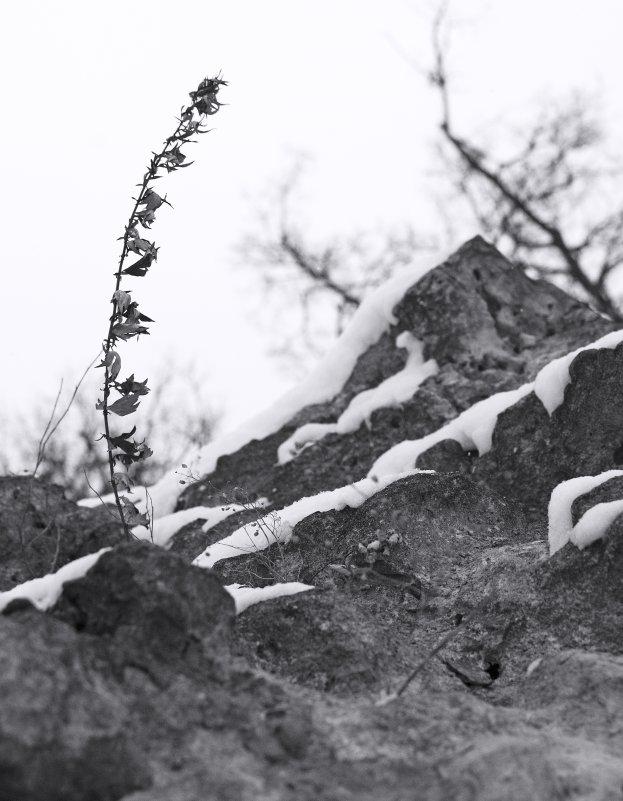 На ветру - Виктор Одинцов