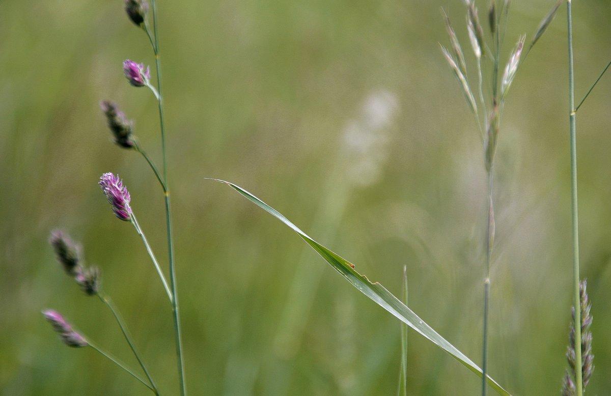 Летние травы..... - Валерия  Полещикова