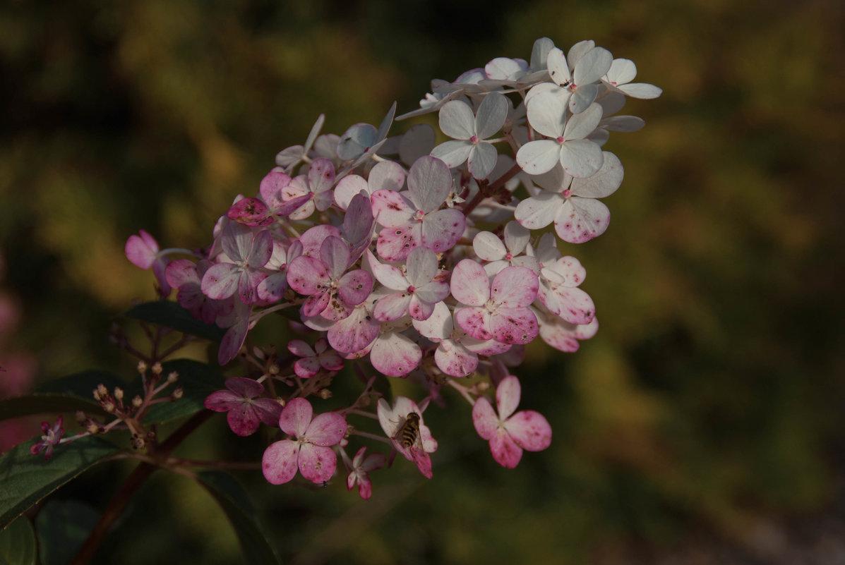 Осенние цветы - Push*ok