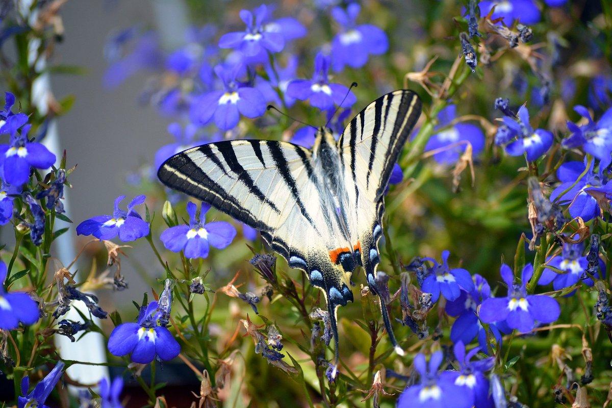 Бабочка - Valeria