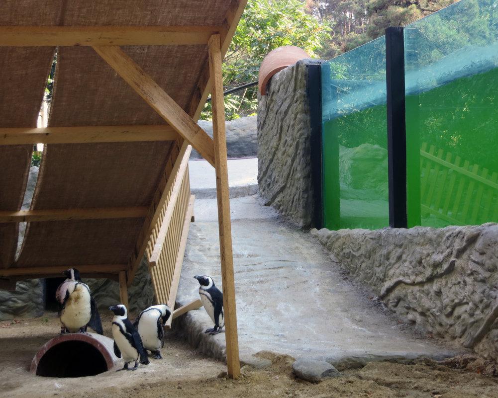 Пингвины в Грузии - Наталья (D.Nat@lia)