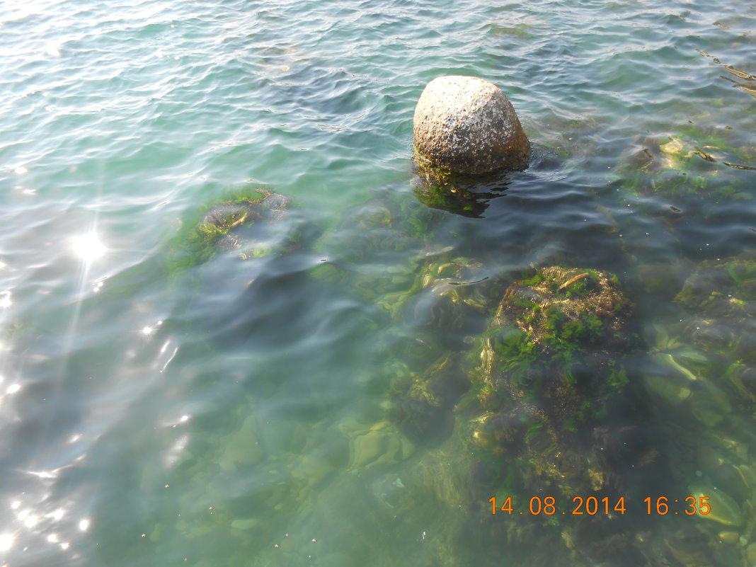 Водный мир - Елена