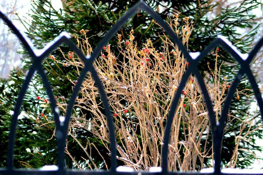 ограда - Светлана Амелина