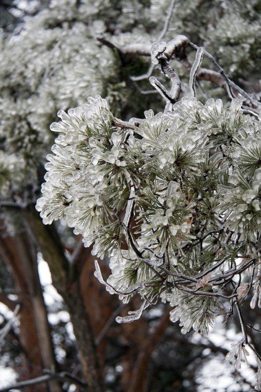 Иголки в ледяной дождь - Ekaterina Shchurina