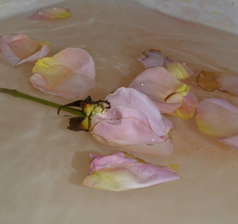 Опавшая роза.... - Светлана Щипкова