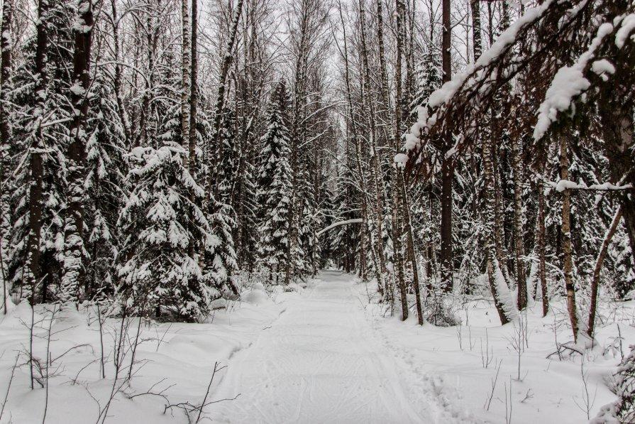 По дороге к Деду Морозу... - Виталий Ахмедьянов