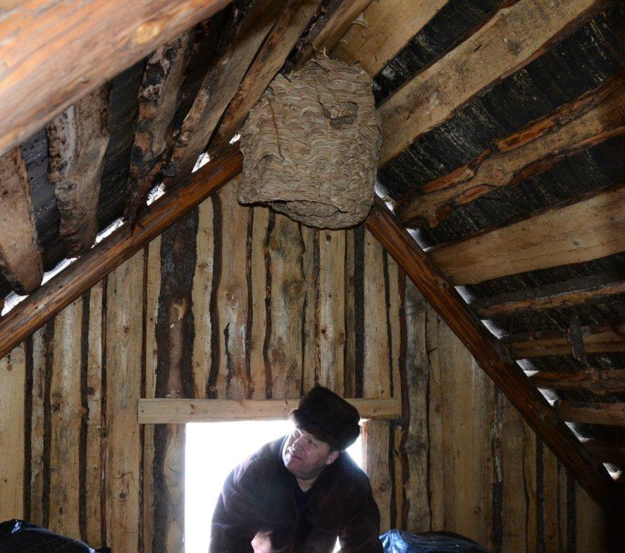 Как избавиться от шершней под крышей в домашних условиях 985