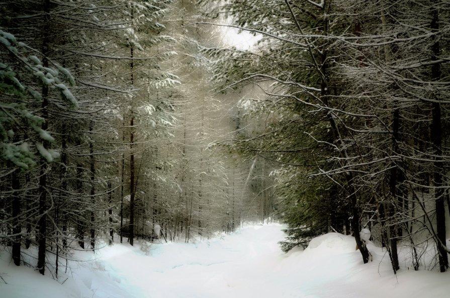Зима в теплых тонах. Тропинка. - Сергей Угренев