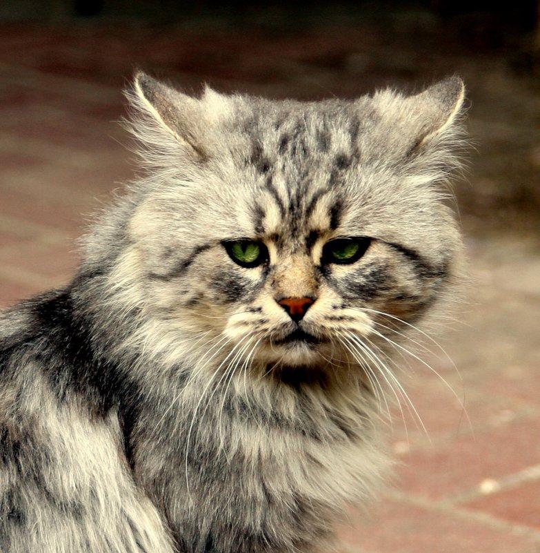 Обижена на кота картинки