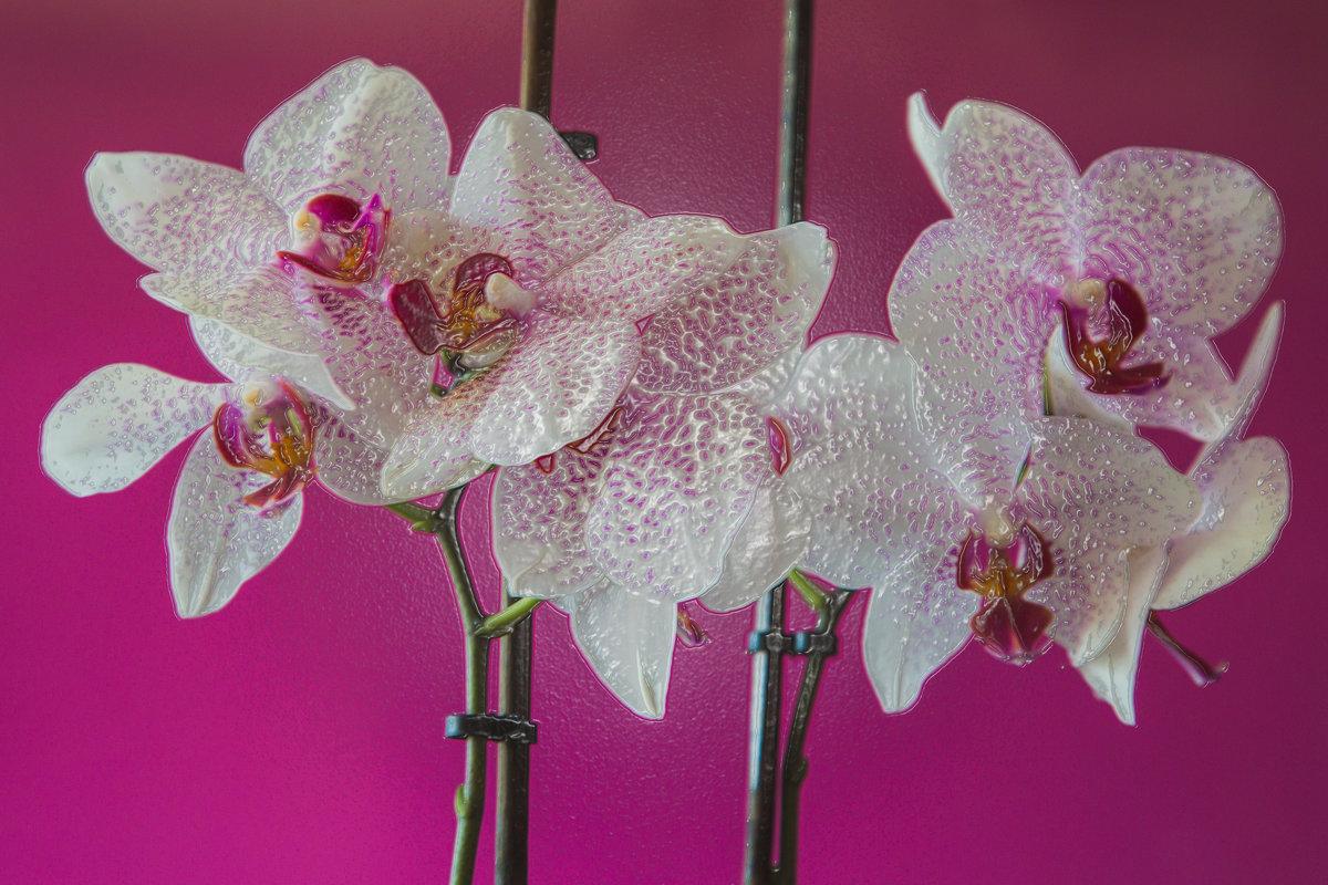 Орхидея в ламинате. - Милена )))