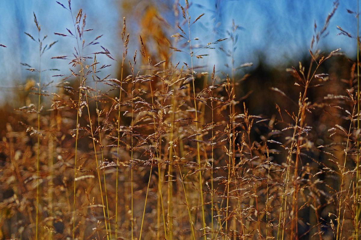 Осень - Диана Мелина