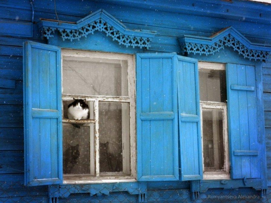 Зимние коты - Александра Румянцева