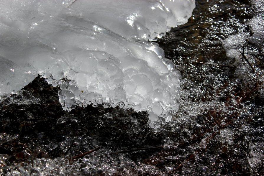 Ледяная лапа - Dr. Olver
