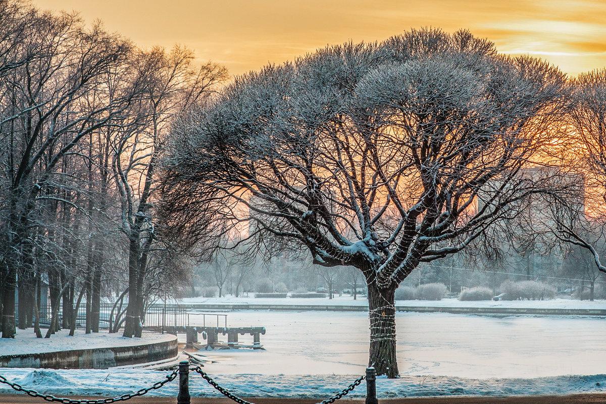 Рождественские морозы - Николай