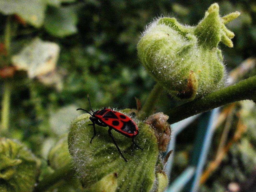 Из жизни насекомых - Алёна Савина