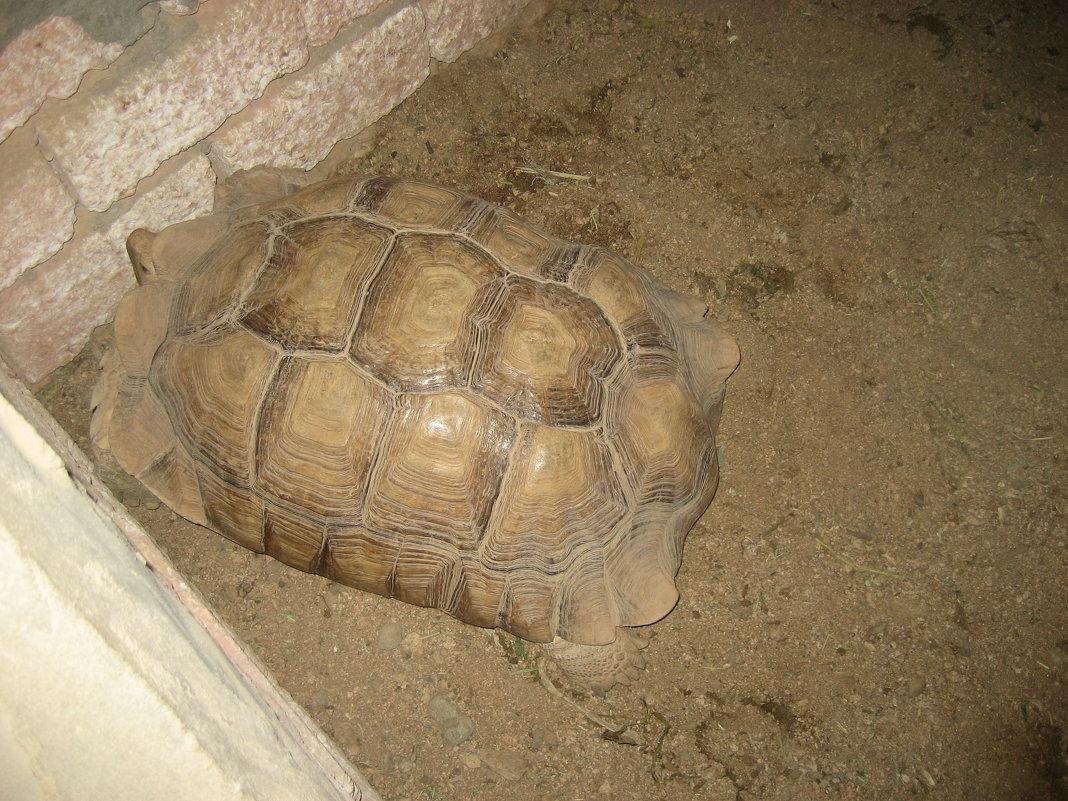 большая черепаха - Михаил Филатов