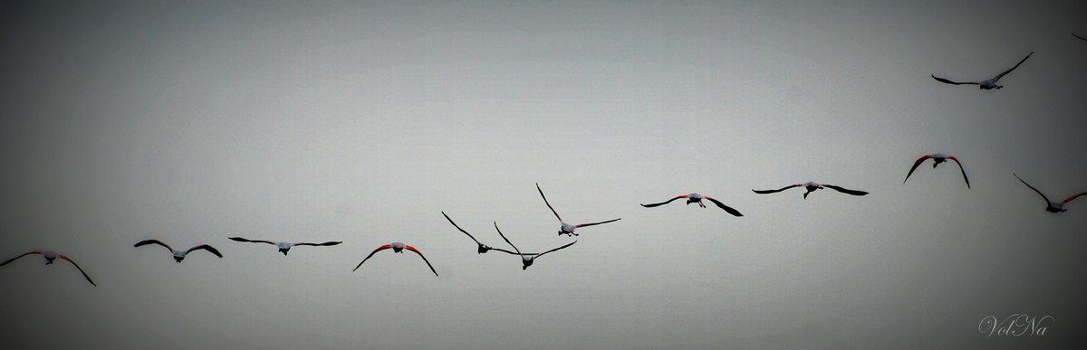 Птички - Наталья Волкова