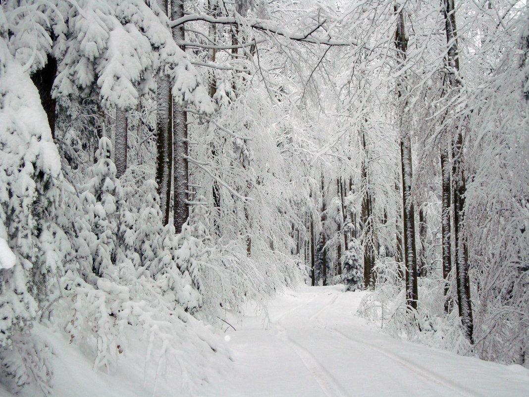 белым снегом... - Olga
