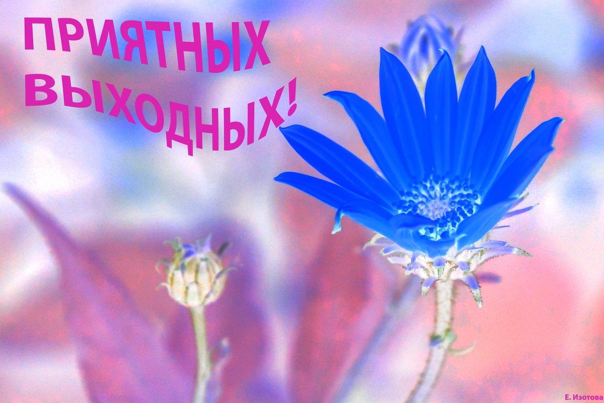 Новых впечатлений, лучших мгновений!!! - Elena Izotova
