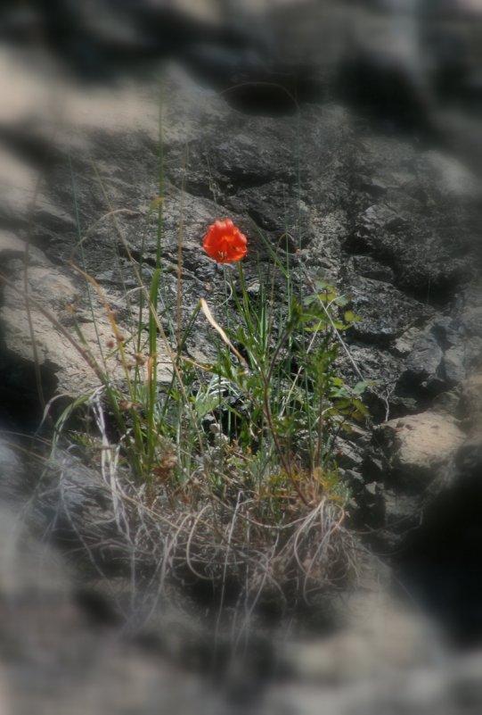 Аленький цветочек - Иван Гиляшев