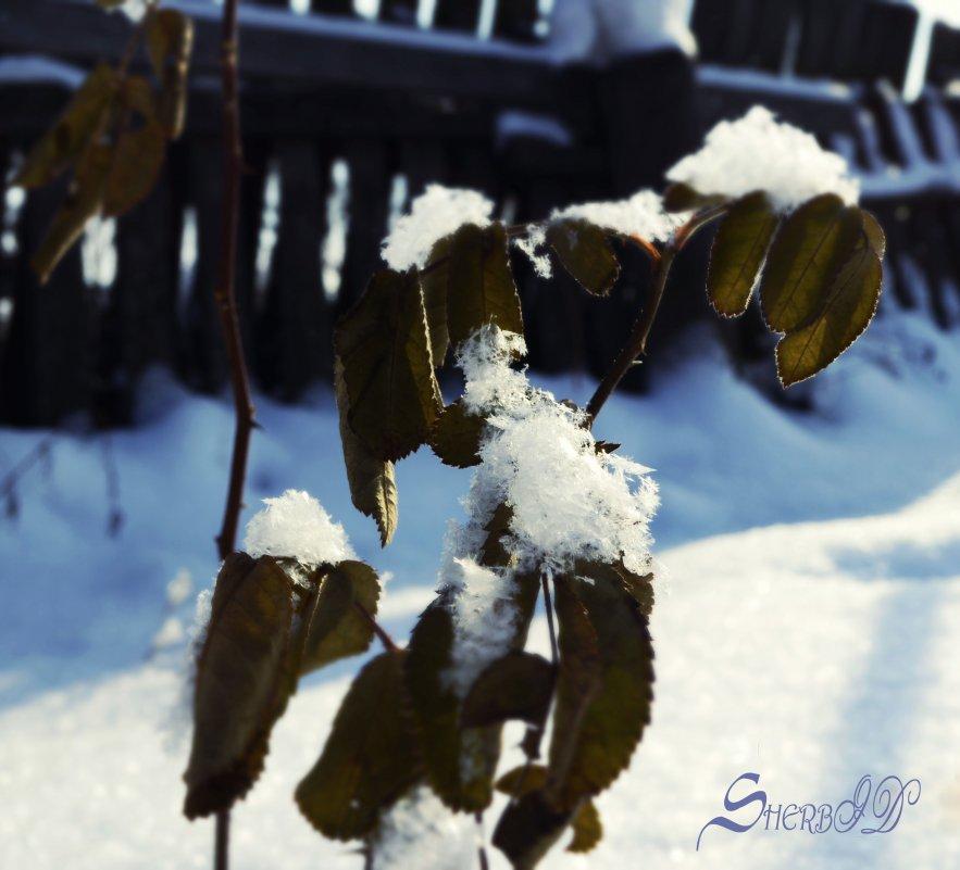 Зима - XDЩерED 1186