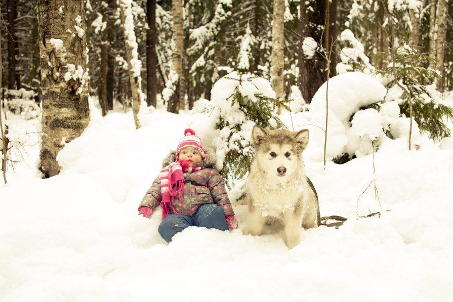 Зимняя сказка с хаски - Константин Онисько