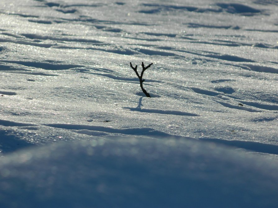 Еще в полях белеет снег.... - Lina Liber