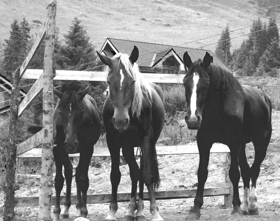 лошади - Лариса Панченко