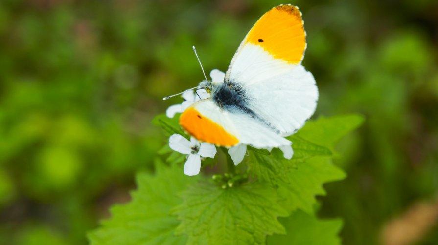 Бабочка в районе Попова Хутора, Владикавказ - Zak Doguzov