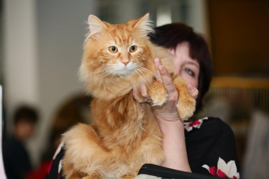 Выставка апрельский кот 2012 - Андрей Юзеев