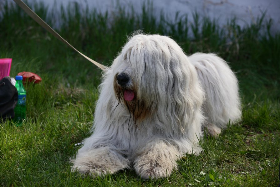 Выставка собак 2012 - Андрей Юзеев