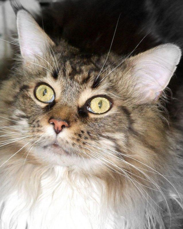 Всемирный день кошек 2013 - человечик prikolist