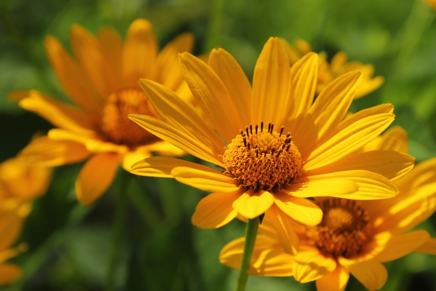 Цветы - Евгений Поляков