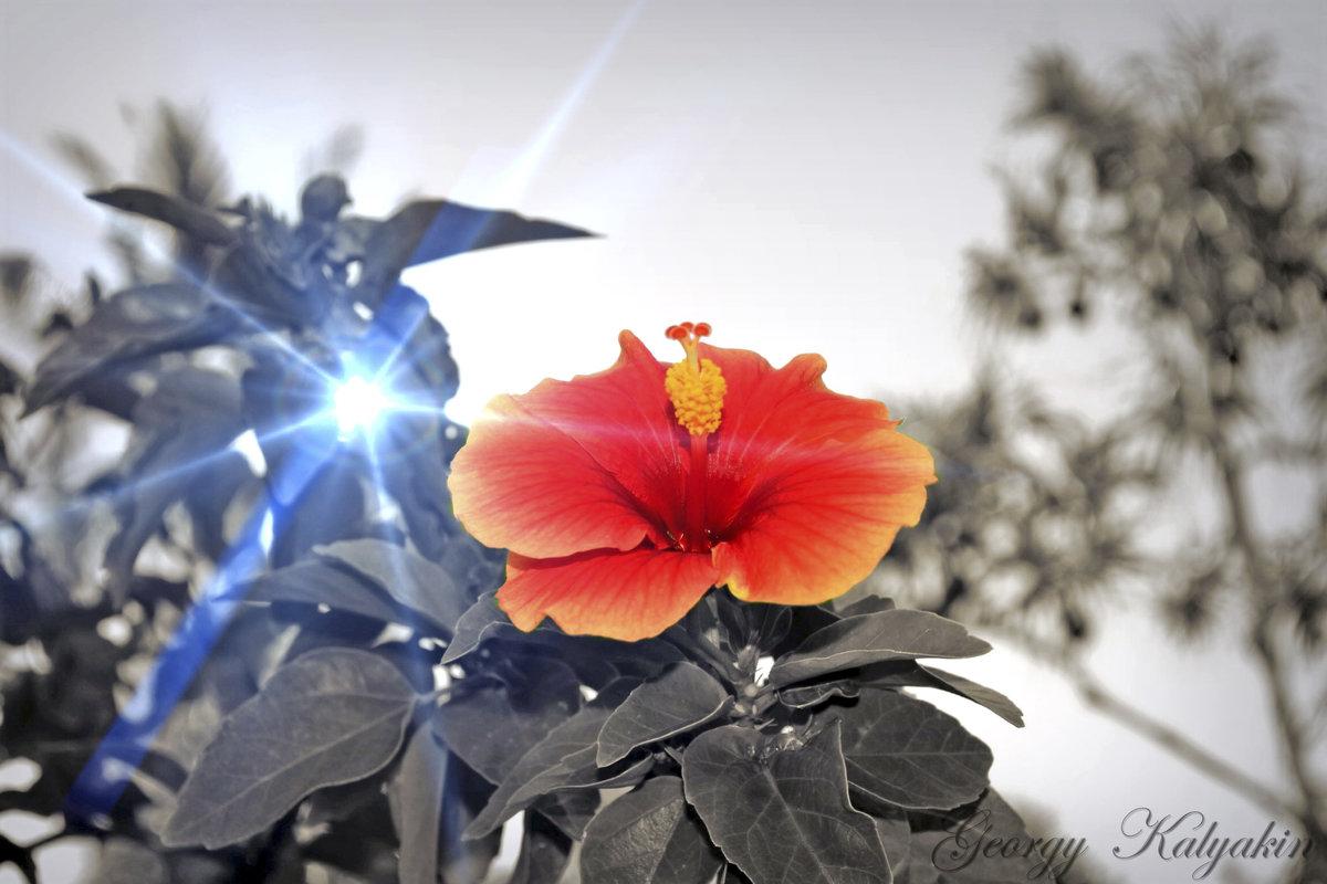 Фото цветка из сказки