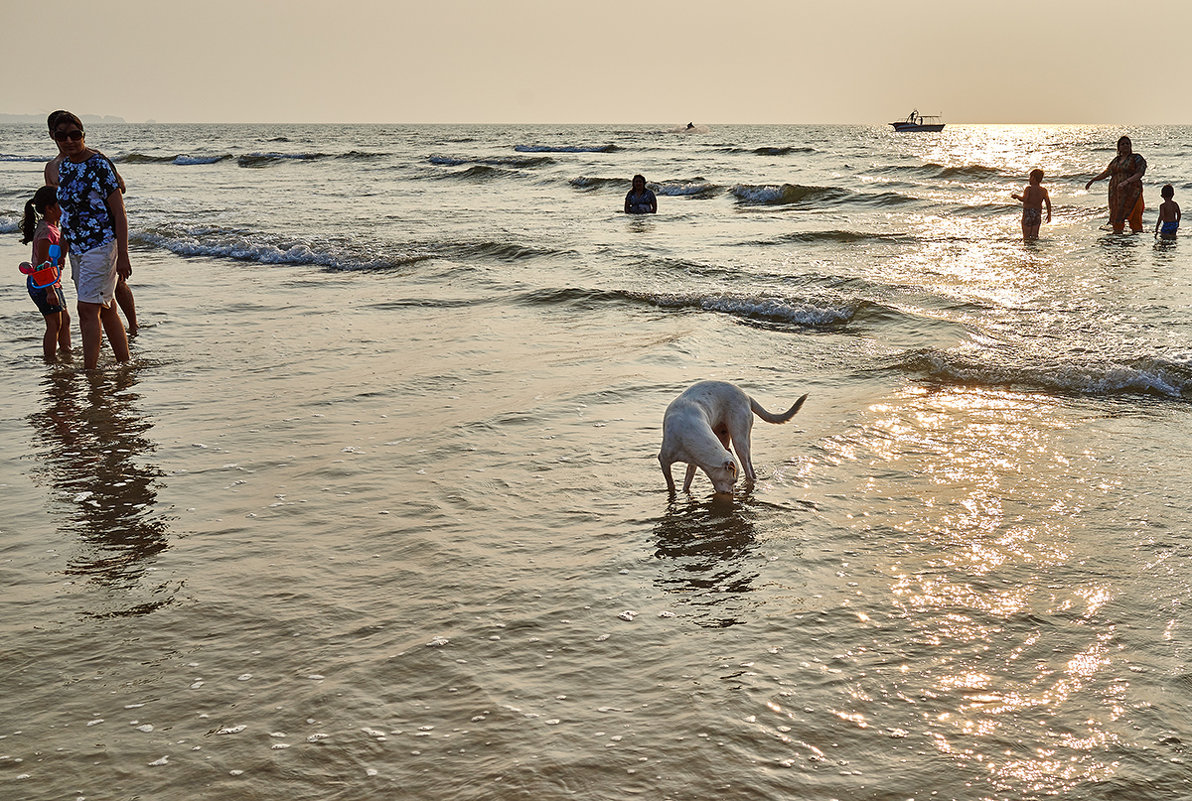 Закатнопляжная собака - Val Савин