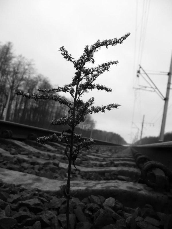 Черно-белая... - Саша Матвіюк