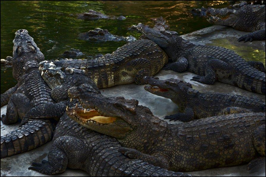 Крокодиловая ферма 5 - Сергей Андриянов