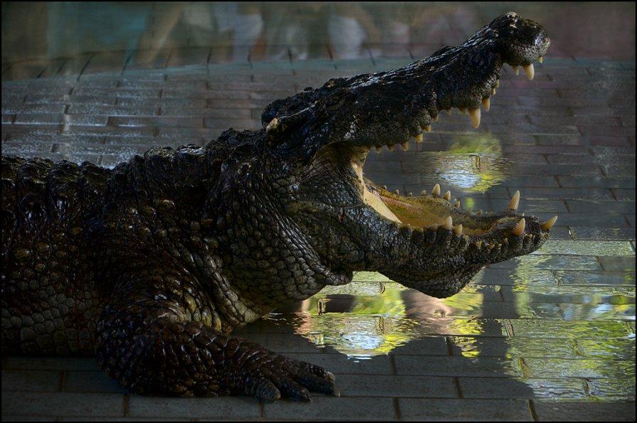 Крокодиловая ферма 1 - Сергей Андриянов